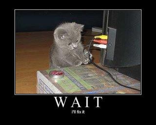 Twitter Cats - 2