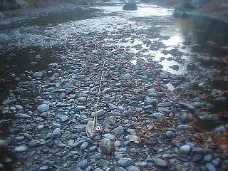 減水した奥多摩川