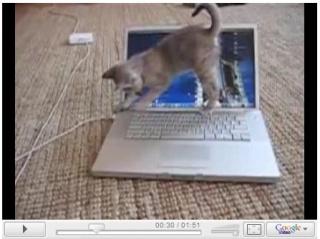 ノートパソコンと子猫
