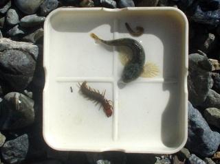 水生昆虫2