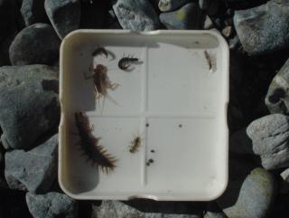 水生昆虫観察・奥多摩川 2012年12月