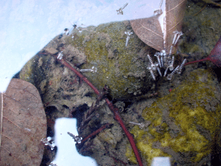 岸辺のトラップに浮かんでいたシャック