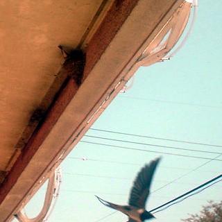 燕の写真から