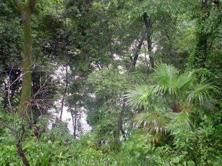 増水の奥多摩川