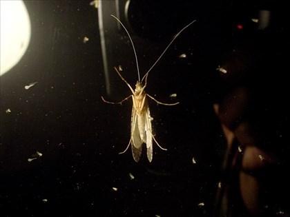 窓辺の水生昆虫図鑑1
