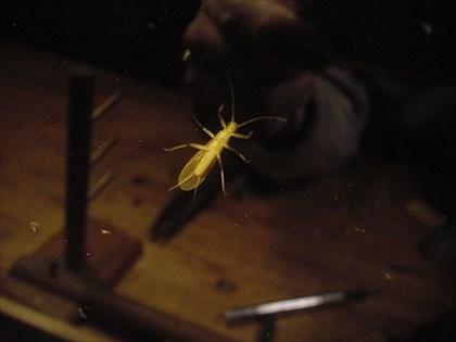 窓辺の水生昆虫図鑑2