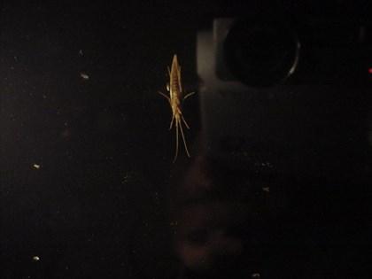 窓辺の水生昆虫図鑑3