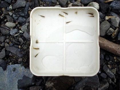 小菅川の水生昆虫