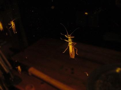 奥多摩川・2016年5月7日 水生昆虫観察5