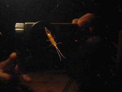 奥多摩川・2016年5月7日 水生昆虫観察2