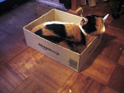 猫+ダンボール箱